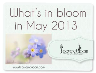 what's in bloom in May 2013