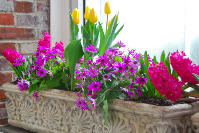 One of my favorite containers: Yellow tulips, purple daisies and pink hyacinths.
