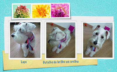 fotos cachorro de roupa