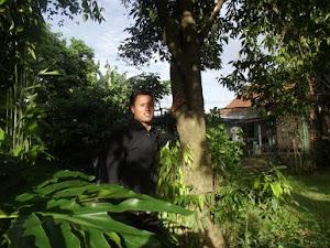Pohon gaharu Siap Panen