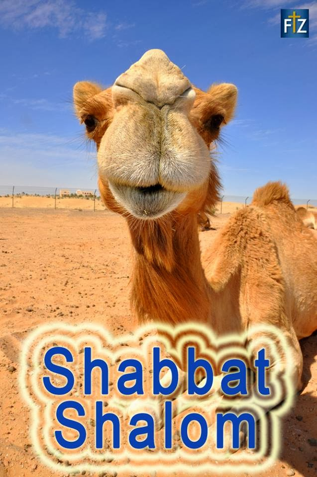 Love for his people shabbat shalom to our jewish friends shabbat shalom to our jewish friends altavistaventures Images