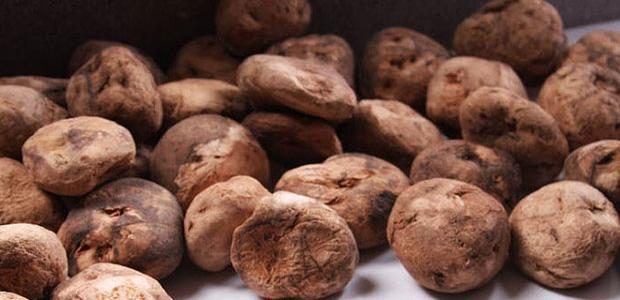 4 super alimentos nativos de Bolivia