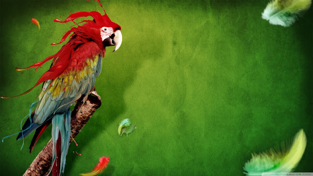 parrot, wallpaper