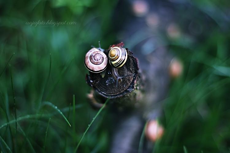ślimak, ślimaki, snail, snails, photography, nature photography, fotografia przyrodnicza