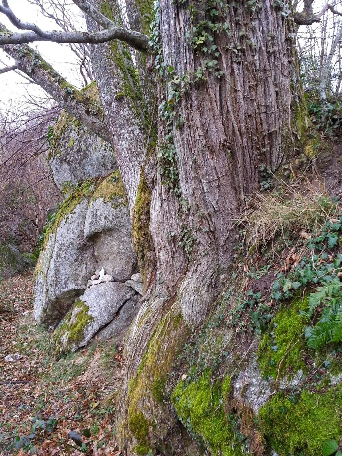Permafor u00eat Le biotope du Ch u00e2taignier et de la foug u00e8re aigle  # Châtaignier Bois De Chauffage