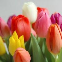 tulipanes de diversos colores