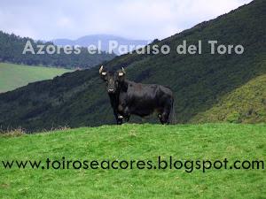 Açores, o Paraíso do Toiro