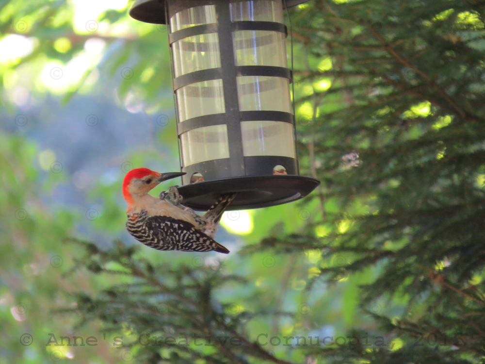 how to build a woodpecker feeder