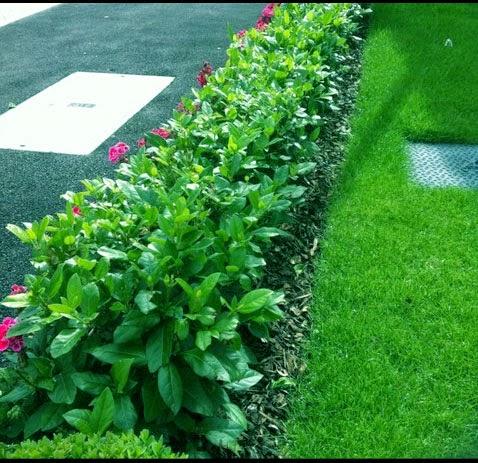 tips membuat rumah cantik dengan pagar tanaman tips