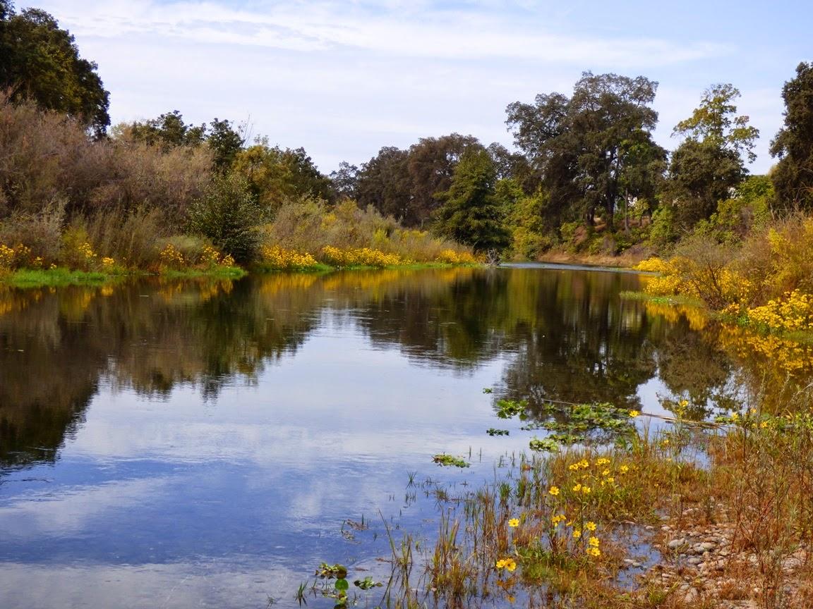 Geotripper\'s California Birds: October 2014