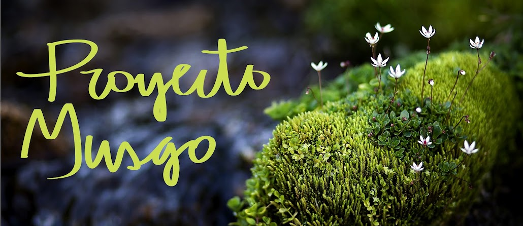 Proyecto Musgo