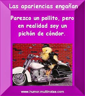 Imagenes Graciosas de Animales, Pollito Motociclista