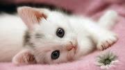 cute cat beautiful cute cat eye wallpaper