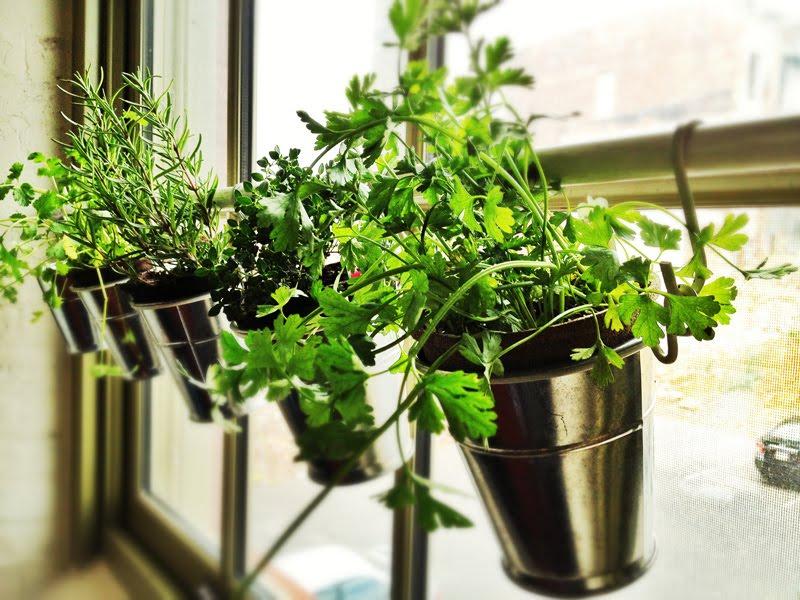 Home Window Herb Garden