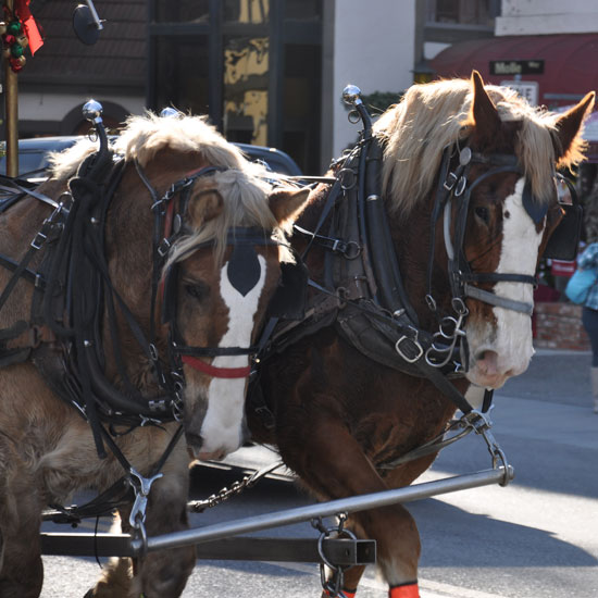 Solvang horses by Lady by Choice