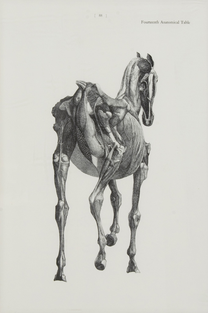 Exelent George Stubbs Anatomy Of The Horse Gallery - Anatomy And ...