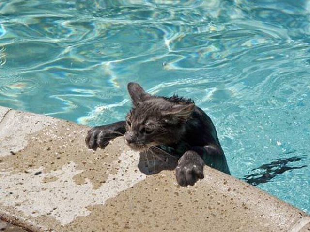 Swimming Cats are so Funny.