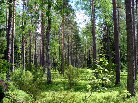 ekosysteemipalvelut määritelmä Maarianhamina