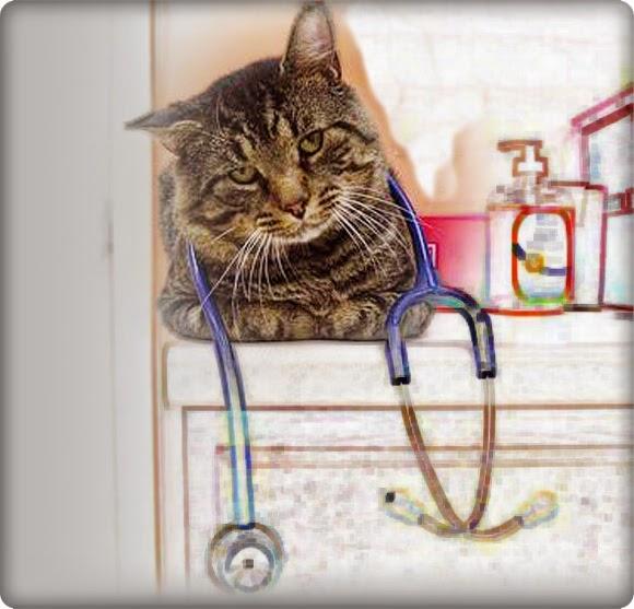 Cat Doctor