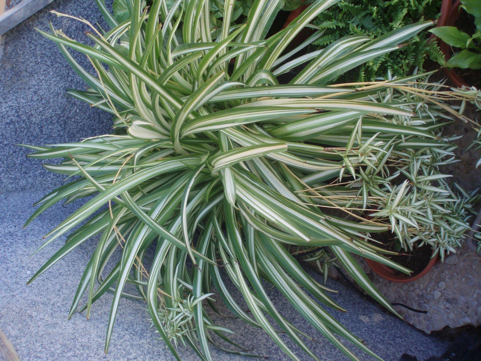Crear un jard n septiembre 2011 for Plantas de jardin resistentes al frio