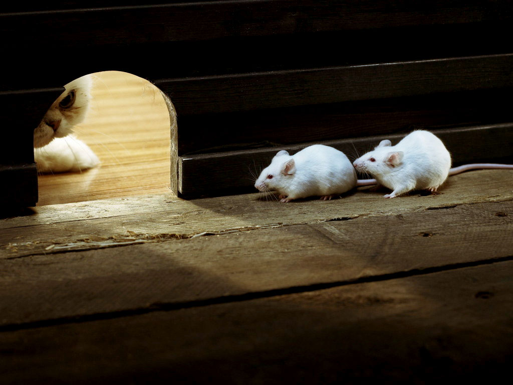 white mice pets cute and docile