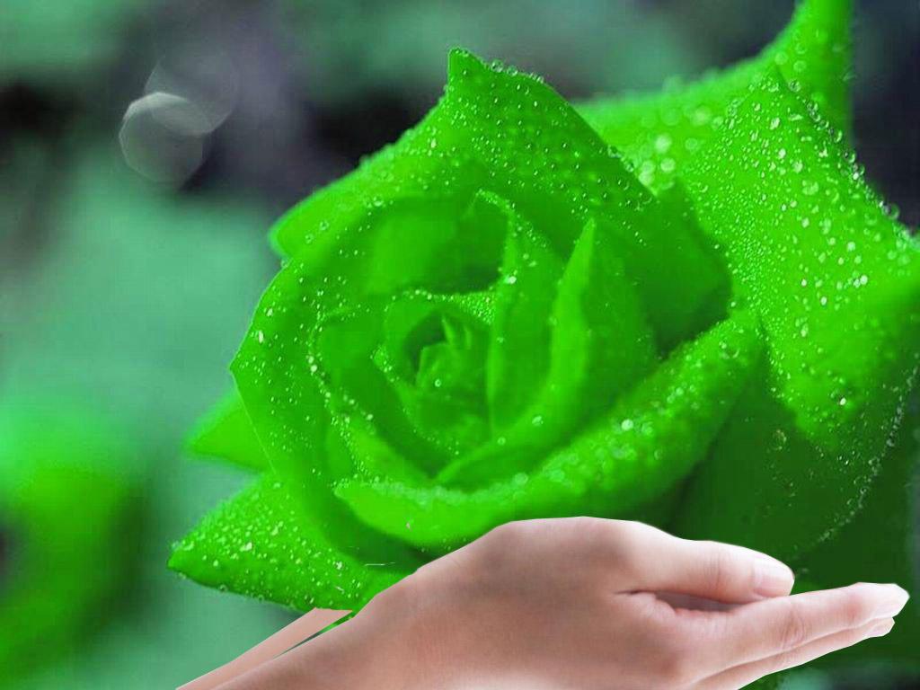 flowers for flower lovers Green rose flower