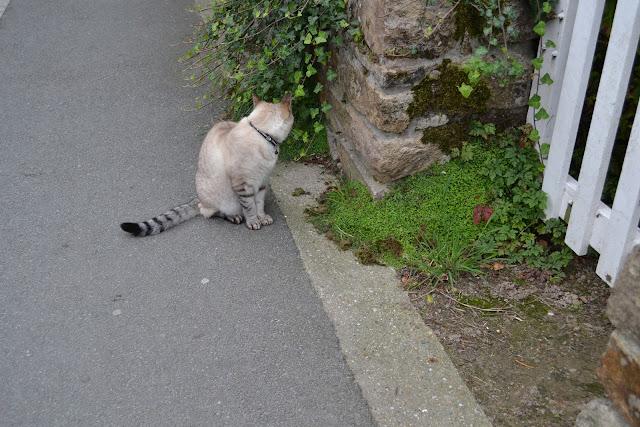 un chat dans une ruelle