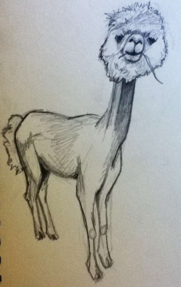 But, turns out llamas are hard to draw.