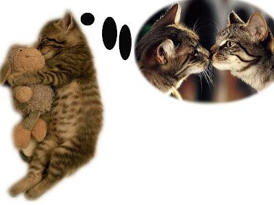 Apa itu Feliway dan apa efeknya bagi kucing?