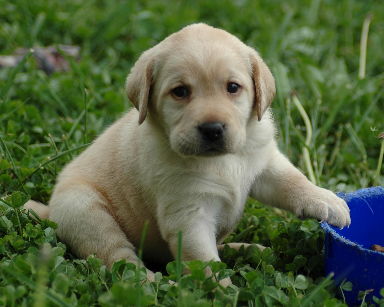 hd animals cute puppies and kittens wallpaper