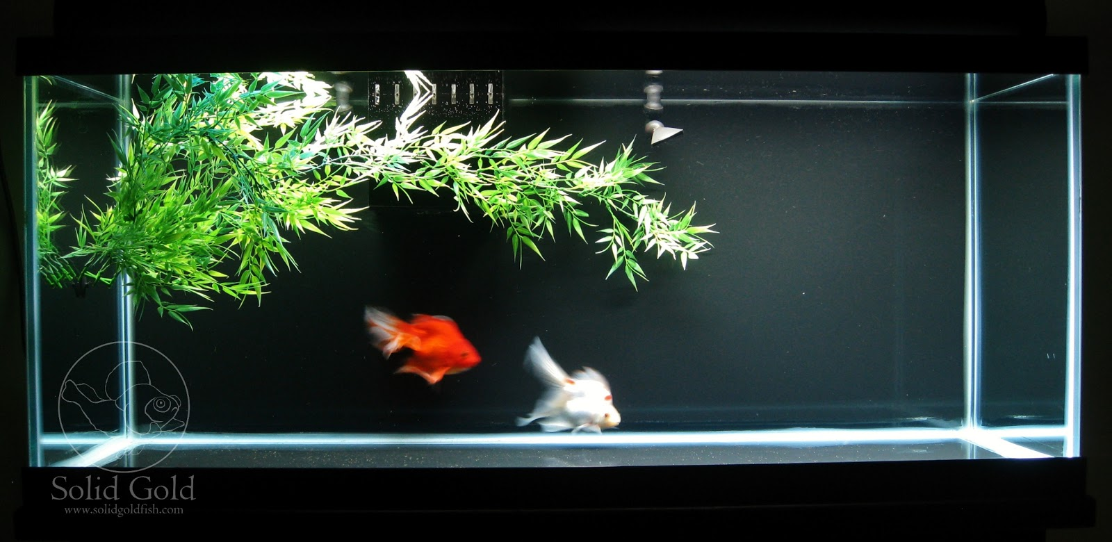 Cool goldfish tank ideas the image kid for Fish tank for goldfish