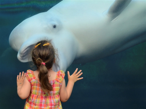 Beluga whale appears to swallow girl (PHOTOS)