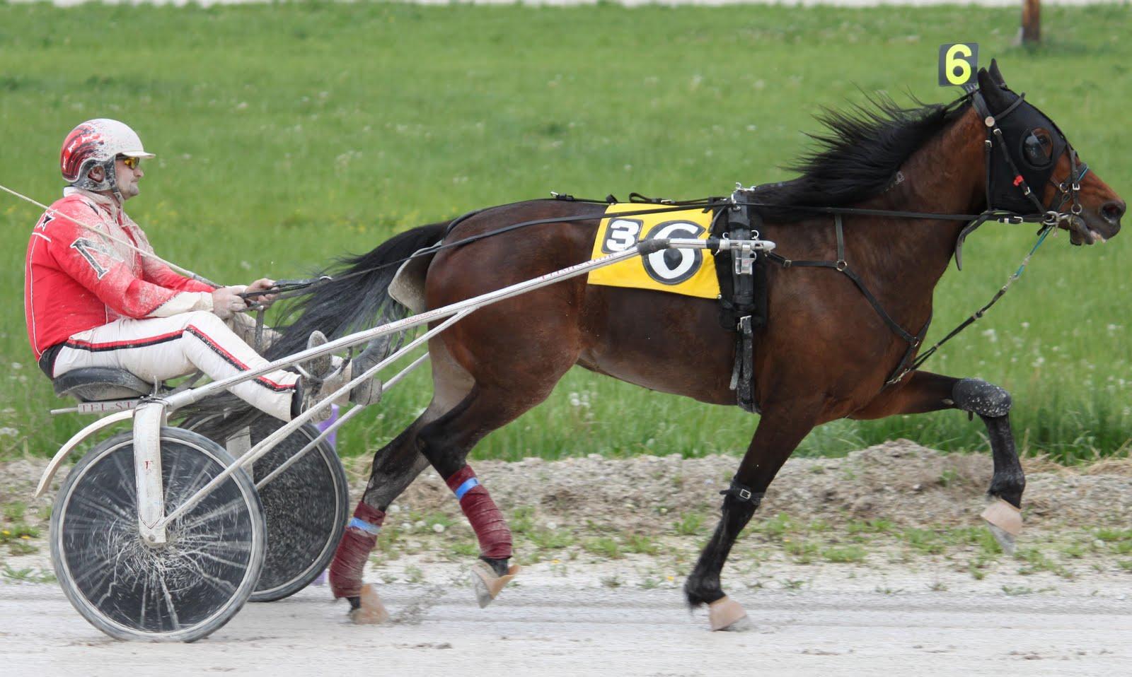 Race 3 nw $1000 in Last 5
