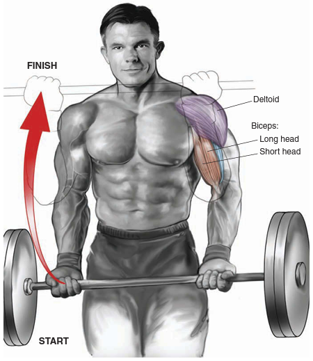 Best Bicep Workout For Mass and Tone