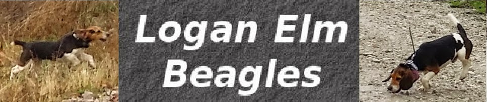 Logan Elm Beagles