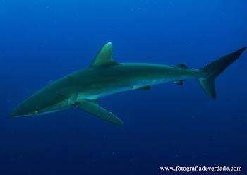Tubarões ( part IV ) Considerações Finais
