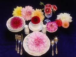 First thing to know is about Dahlias is that they are grown from tubers and not bulbs. A bulb is an underground storage part of the plant. & Stepford Sisters: Dinner Plate Dahlias