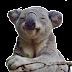 Vídeo viral.- Mujer aterrorizada filma como es perseguida por un koala