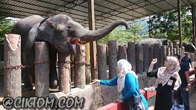 Selendang bermesra dengan pecinta gajah, miss athirah :)