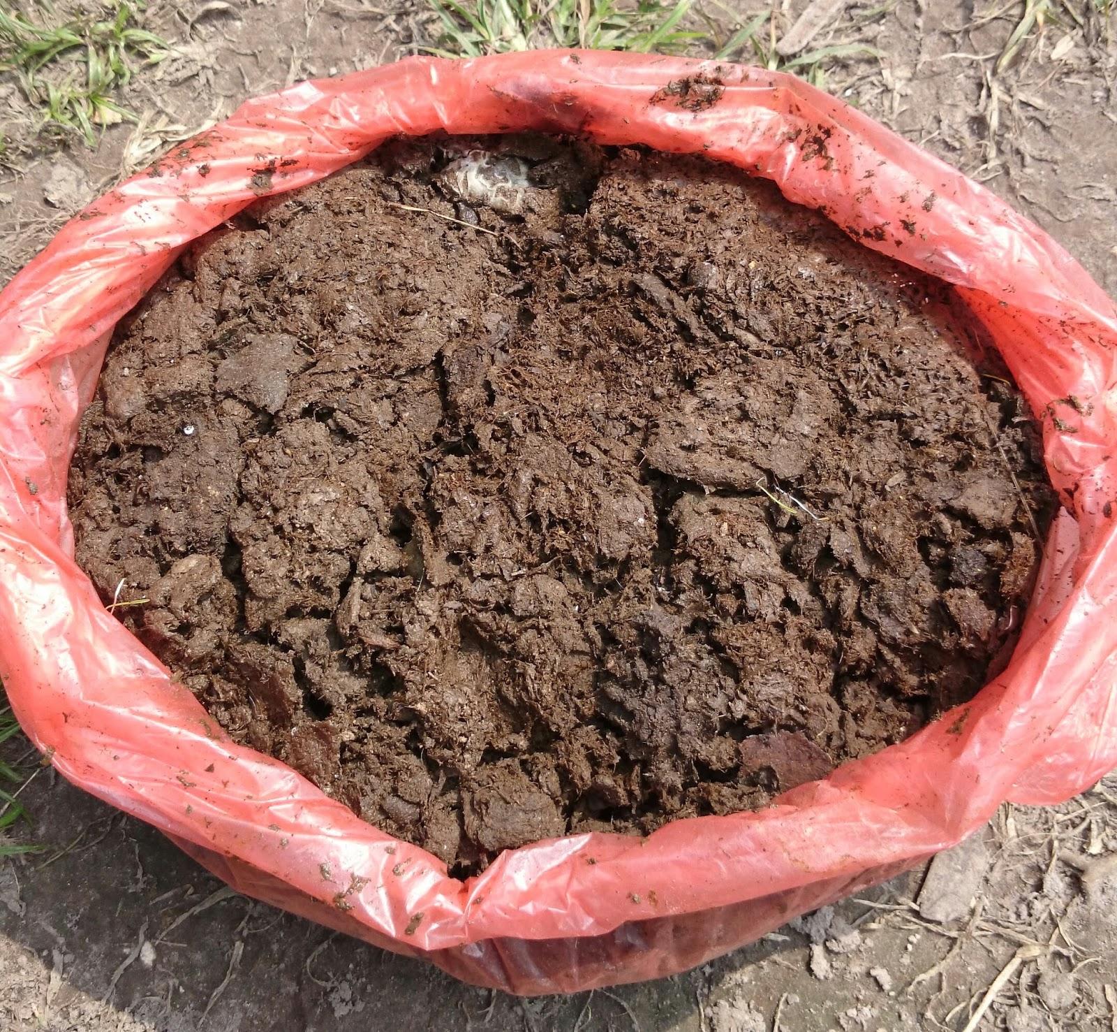 Kompos tinja lembu dan rumput