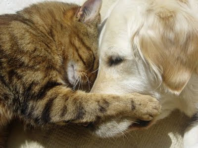 hd animals cute dogs and cats together
