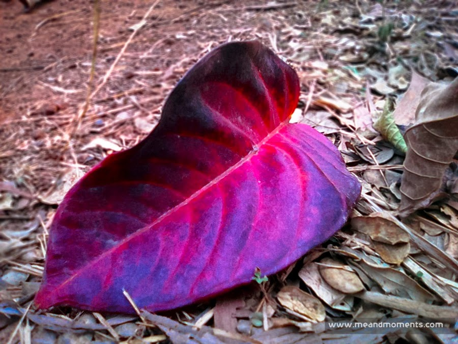 Fallen leaves, leaves quotes, red leaves, pink leaves