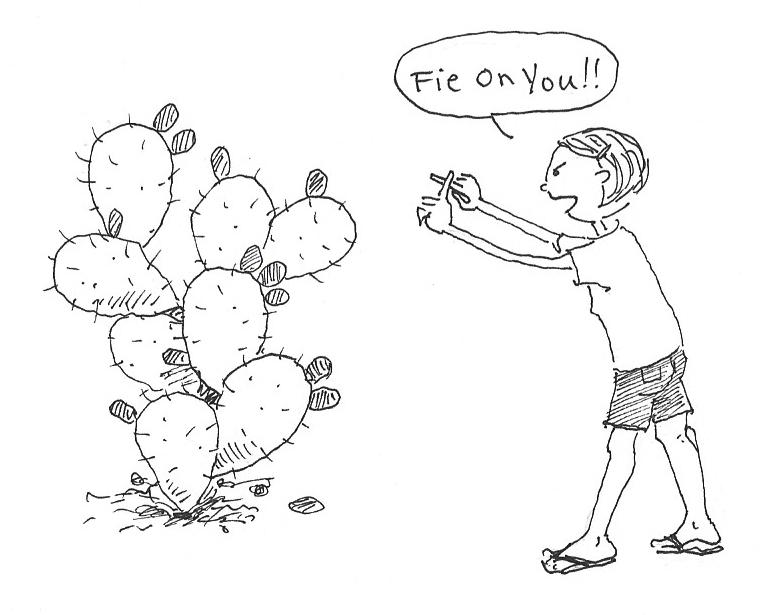 prickly pear cactus sketch the image