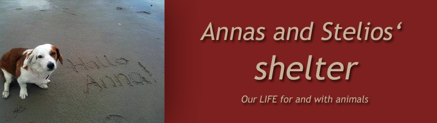Anna's and Stelios Shelter