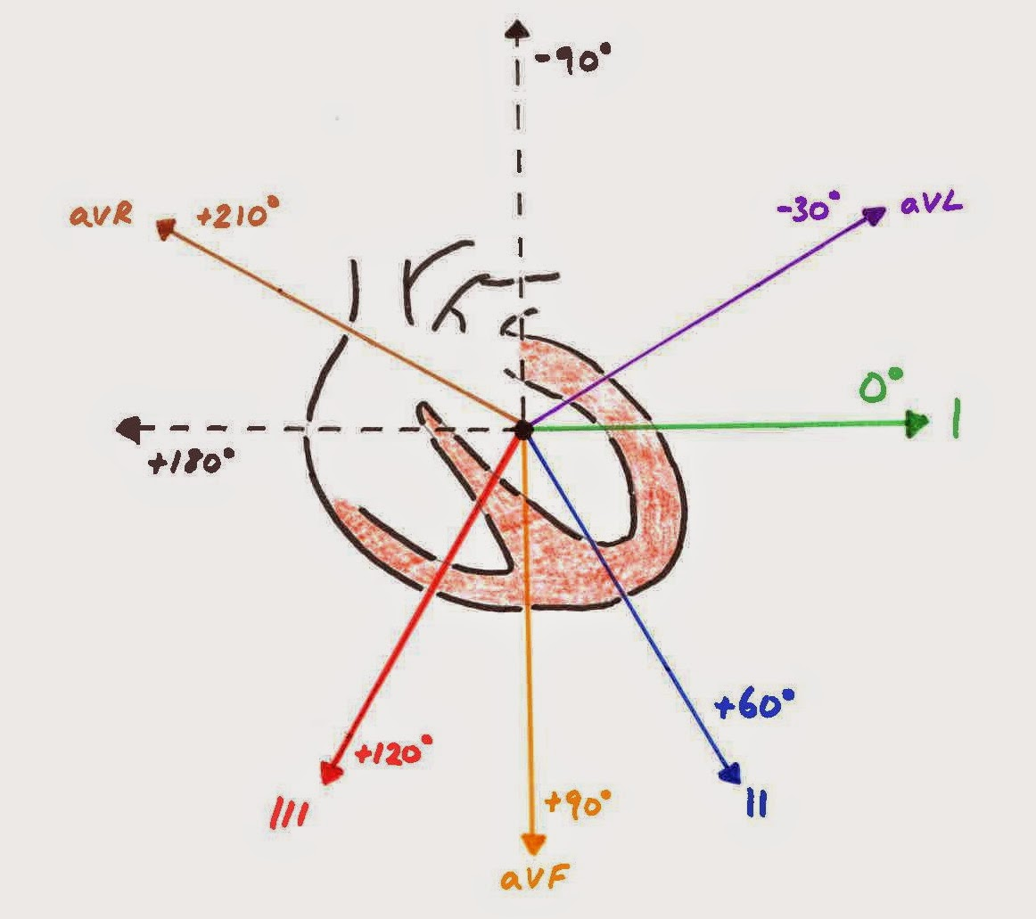 Heart vector axis