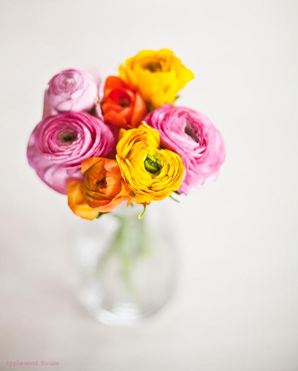 Ranunkeln Blumen Flowers ranunculus