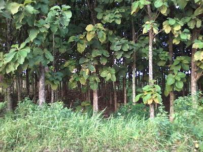 Hutan desa