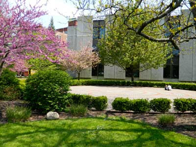 Eastern Redbud, Cercis canadensis, at Clifton Springs Hospital & Clinic Labyrinth