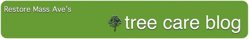 Tree Care Blog
