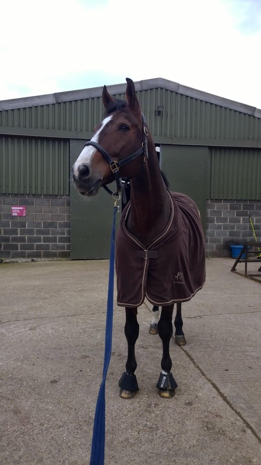 Roosa's Horsey Life: Hairy beast!
